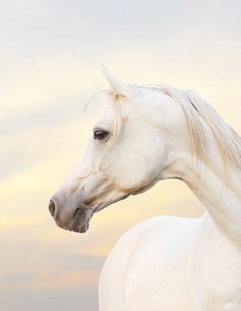 ホワイト ホース