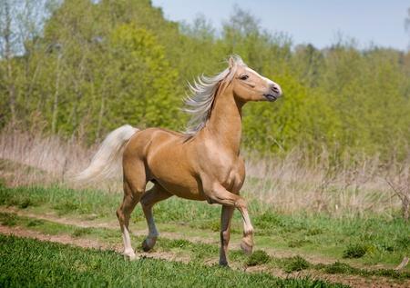 trotting: walking horse