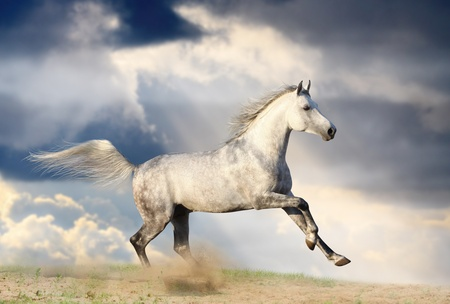 stallion in dust photo