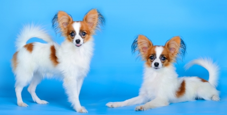 small dogs photo