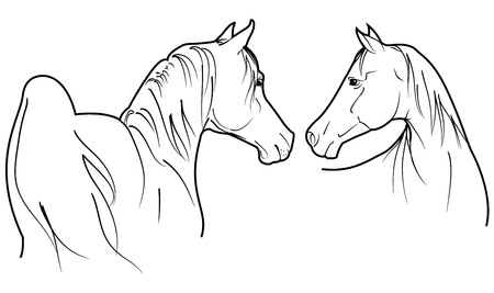 saddle: two Arabian horses