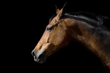 Pferd auf schwarz Standard-Bild - 14077024
