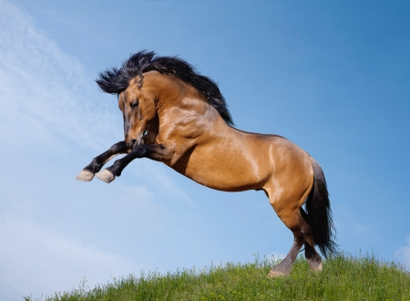 wild stallion playfull photo
