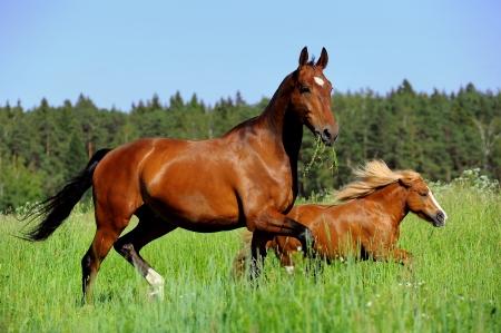 paard en pony op een vrijheid Stockfoto