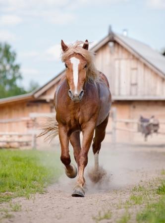 paard op de boerderij Stockfoto