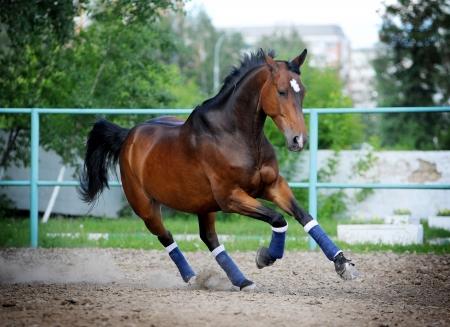 paddock: horse in paddock