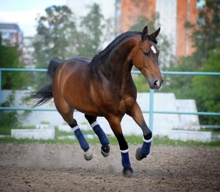 trotting: horse in paddock