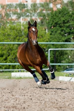 horse running photo