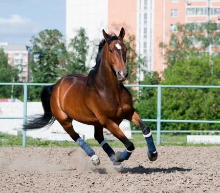 Pferd im Fahrerlager Standard-Bild - 14402797