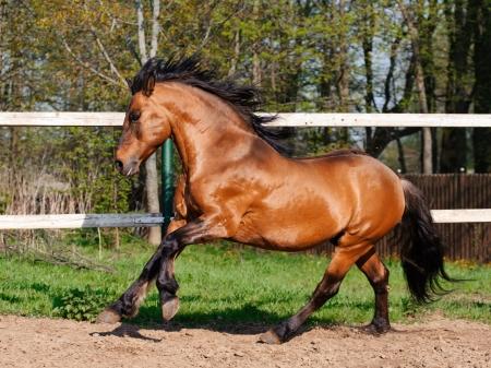 ギャロッピング美しい種牡馬