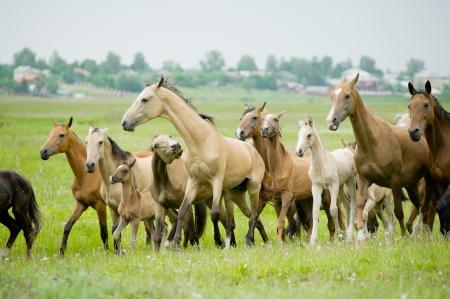 horses herd photo
