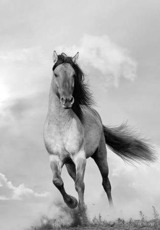 日没で実行されている野生の種馬