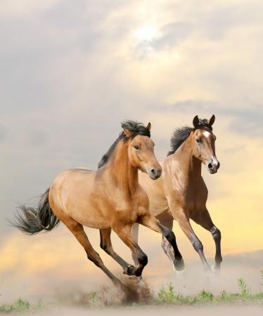 grey horses: horses in dust in sunset