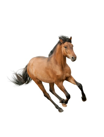 horse isolated: horse isolated over a white Stock Photo