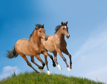 jonge paarden Stockfoto