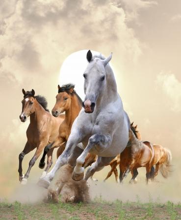 caballos negros: caballos en el atardecer
