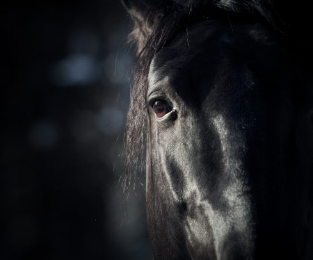 暗闇の中で馬の目
