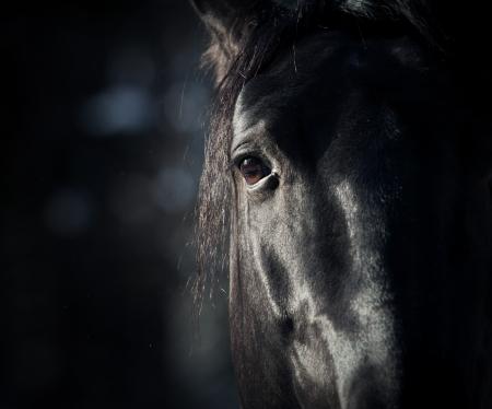 paardenhoofd: paard ogen in het donker Stockfoto