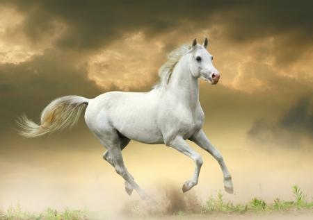 日没の白い馬 写真素材