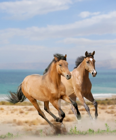 Paarden in de woestijn Stockfoto - 16828981