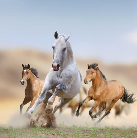 пыль: диких лошадей в пустыне Фото со стока