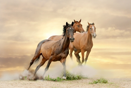 horses in sunset running in dust