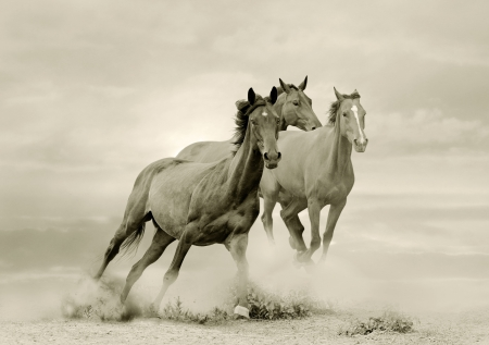 horses in dust photo
