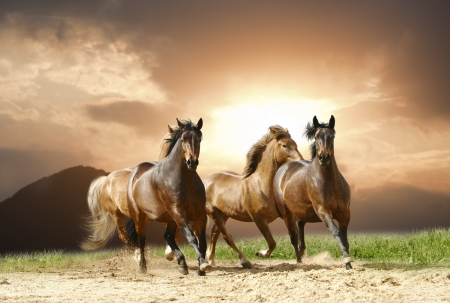horses in the wild: horses in summer