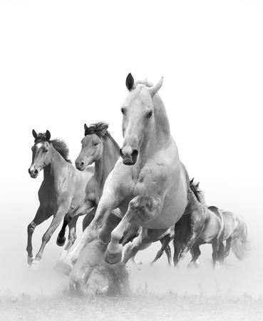 paarden in zonsondergang