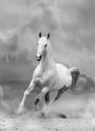 white horse in sunset Imagens