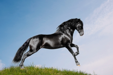 black horse in a field photo