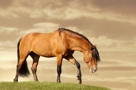 horse in field walking photo