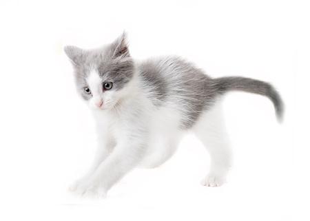 attention grabbing: kitten isolated