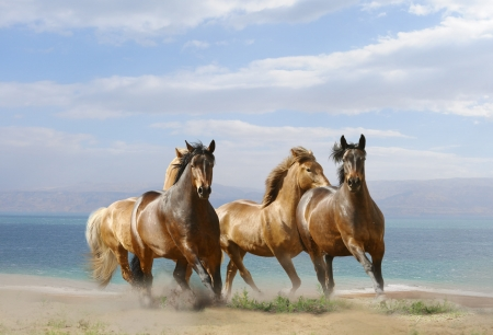 horses in summer photo