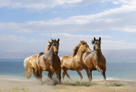 running horses: horses in summer