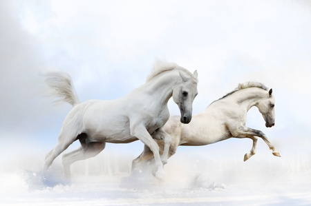 雪の中で馬