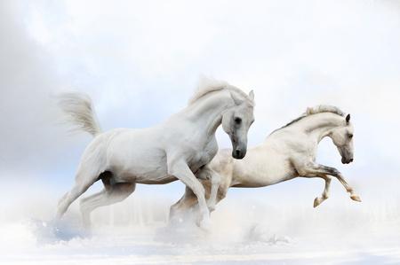 Pferde im Schnee Standard-Bild - 16828989