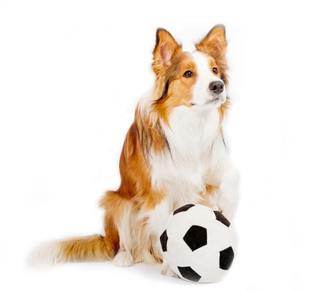 dog with ball isolated photo