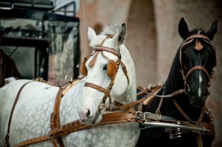 horse and carriage: horse carriage