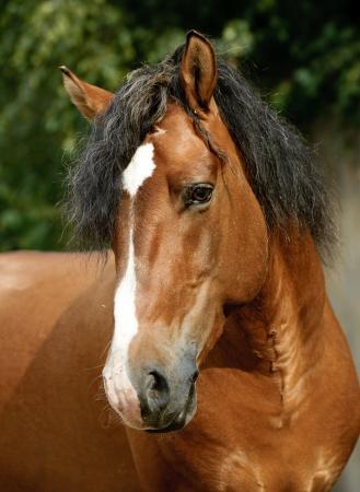 draft horse: horse run