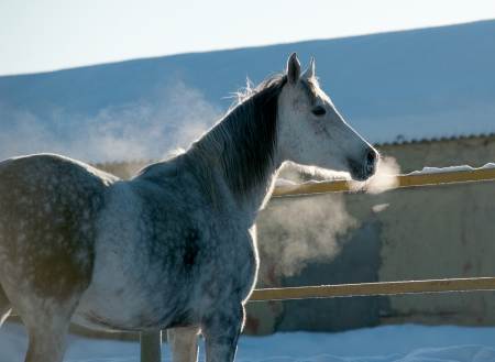 Pferd im Winter photo