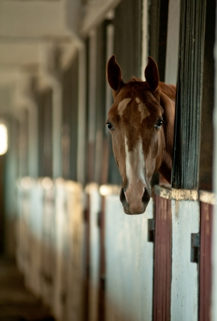 the stalls: arabian foal in stable Stock Photo