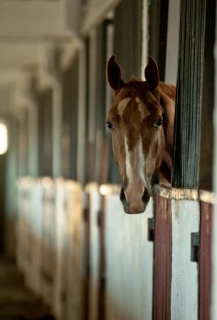 stud: arabian foal in stable Stock Photo