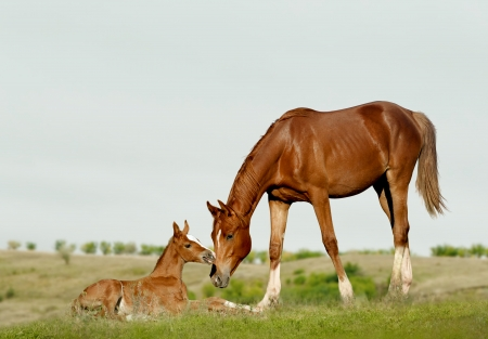 halter: mare and foal