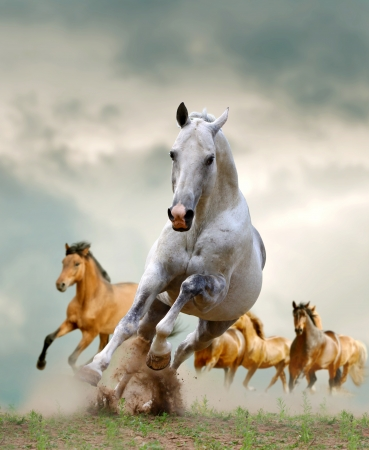 horses  Stok Fotoğraf