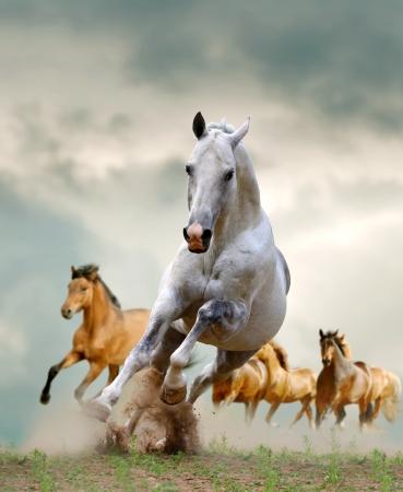 mustang horses: horses  Stock Photo