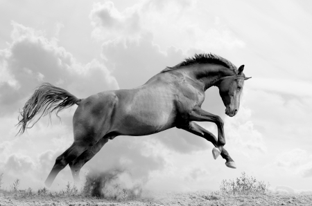 stallion plays Stock Photo