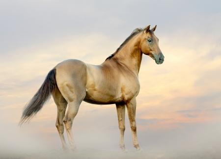 Pferd im Nebel Standard-Bild - 25112862