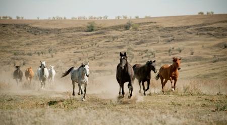 animals together: horses herd Stock Photo