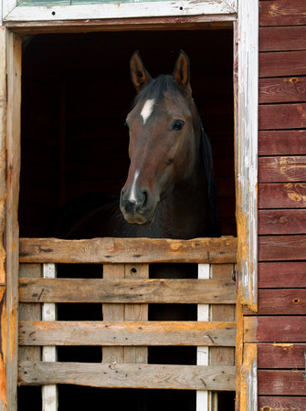 horse stable: horse in stable   Stock Photo